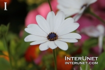 white-flower-amazing