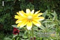 yellow-flower-beautiful