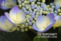 yellow-purple-flowers