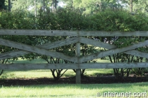 lumber-fence-in-combination-with-hedge