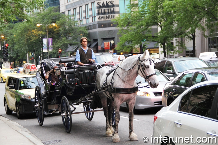 Carriage ride on Magnificent Mile