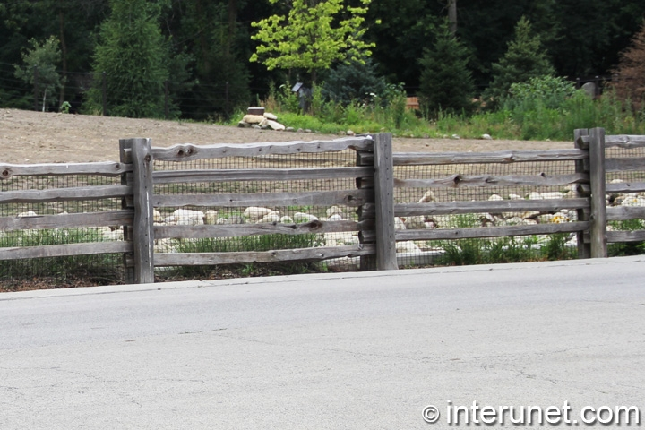 animals-barrier-fence-in-zoo