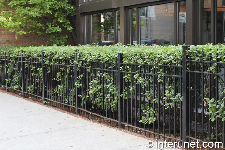 combination of steel fence with hedge