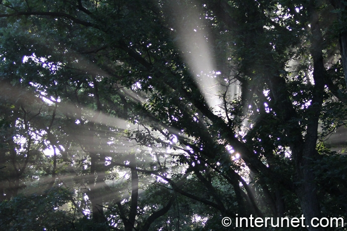 sun-rays-coming-through-the-trees