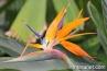 amazing-orange-purple-flower