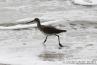 bird-running-in-the-water