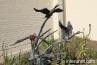 ducks-sculpture-in-Brookfield-Zoo