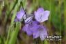 amazing-purple-flowers