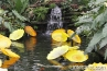 pond-with-waterfall