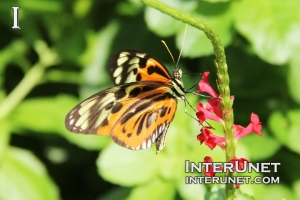 beautiful-butterfly-on-the-flower