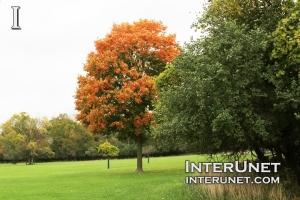 fall-red-tree