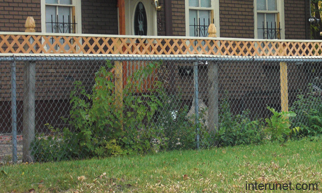 Chain link stylish fence rejuvenated picture interunet chain link stylish fence workwithnaturefo